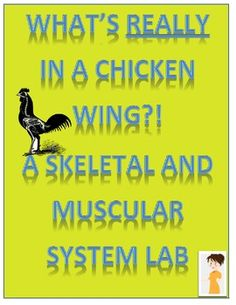 Skeletal and Muscular System Lab (Chicken Wing Dissection) & several other good A labs