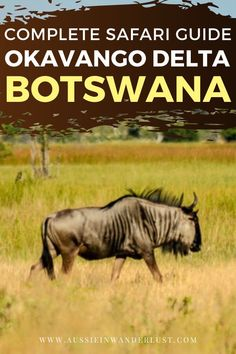 How To Experience an Epic African Safari at the Okavango Delta in Botswana The Okavango Delta in Botswana is the perfect place to experience an amazing Safari in Africa. Kenya Travel, Morocco Travel, Africa Travel, Sands Resort, Travel Tips, Travel Advice, Travel Ideas, Travel Destinations, Largest Waterfall