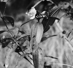 wild flower #1