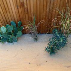 dry garden Dry Garden, Plants, Garden Landscaping, Atelier, Plant, Planting, Planets