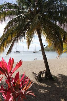"""Roseau, Dominica   What would you do with 8 hours in Dominica? The famed nature island is uncluttered, calm, and beautiful, from the fizzing Champagne Beach to the island's rushing waterfalls and volcanic terrain. Cruise with Royal Caribbean to Dominica, or as it's known to the locals, """"Waitukubuli."""""""
