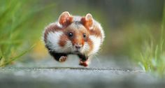Перед вами снимки финалистов конкурса наиболее неординарных и смешных фотографий животных — Comedy Wildlife Photography Awards.  |  #животные  #comedywildlifephotographyawards  #приколы