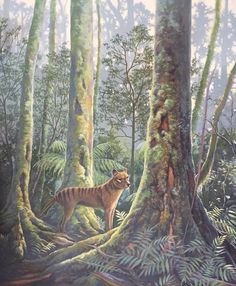 Tasmanian Tiger (Thylacine). Acrylic Painting. By Hayley Farr.