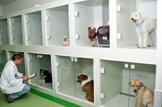 These bays have drainage points to each bay. This allows for individual cleaning. Dog Boarding Kennels, Pet Boarding, Dog Grooming Shop, Dog Grooming Salons, Pet Spa, Pet Hotel, Pet Resort, Dog Cages, Pet Clinic