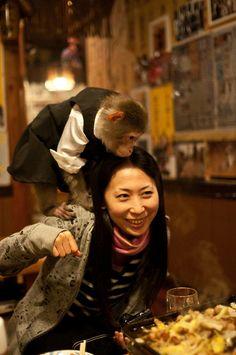 "Monkey Restaurant (Japan) The Kayabukiya Tavern is a traditional-style Japanese ""sake-house"" restaurant (izakaya) located in the city of Utsunomiya, north of Tokyo, Japan Japanese Sake, Japanese Beauty, Japanese Culture, Robot Restaurant, Tokyo Restaurant, House Restaurant, Tokyo Travel, Asia Travel, Places To Travel"