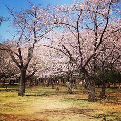 代々木公園 (Yoyogi Park) in Shibuya, Tōkyō