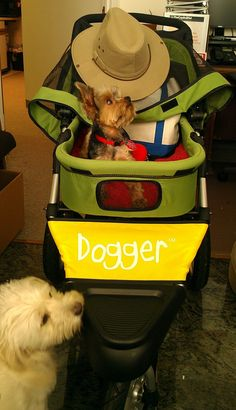 """Just used our new Dogger for the first time on a 2 mile walk with my handicapped Yorkie, Ollie. This is not just the SUV of dog strollers, this is the Rolls Royce of dog strollers.""  Chug Roberts, Alexandria, VA #dogger #yorkie #yorkshireterrier"