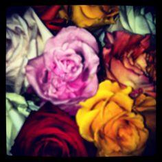 Roses......