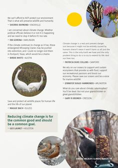 Save the Wild Things, Save Ourselves : The National Wildlife Federation Blog Wild Things, Organizations, Conservation, Sustainability, Wildlife, Organizing Tips, Organizers, Organization Ideas