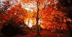 The 18 Most Magical Autumn Sensations