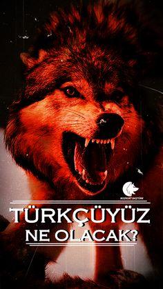 Picture Description, Image Title, Black Sea, Image Boards, Moonlight, Wolf, Ottoman, Lion, History