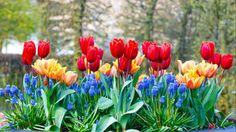 Cebulki kwiatowe – jakie posadzić jesienią w ogrodzie?