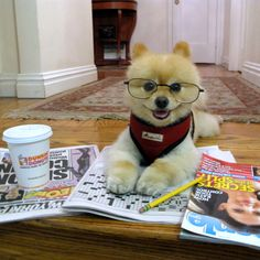 Good Morning Friends! Happy Sunday Funday! For the life of me I can't even guess one word on the crossword puzzle, not one. I guess I have to work harder at it. Got my Dunkin Donuts coffee , the NY Post & People magazine. Oh yes! This is my kind of morning! Love, Sammy