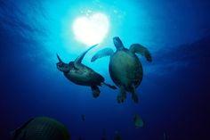 Love sea turtles