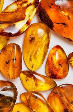 AMBER(Κεχριμπάρι ) Amber helps one ground  express spiritual thoughts + assists in dissolving  harmonizing energy blockages. It is a powerful healer  cleanser of the body, mind  spirit. It cleanses the environment, draws disease from the body, heals  renews the nervous system  balances the right  left parts of the brain. It also absorbs pain  negative energy  alleviates stress. It clears depression, stimulates the intellect  promotes self-confidence  creative self-expression ~ Pierre Ambre, Amber Fossils, Rocks And Minerals, Crystals Minerals, Crystals And Gemstones, Stones And Crystals, Healing Stones, Crystal Healing, Spiritual Thoughts