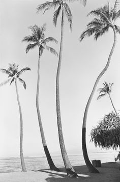 Reminds me of childhood trips to Thailand's beaches! Black and white pics included!!