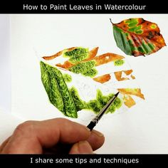 FREE Tutorial on painting realistic leaves in watercolour and the all important foundation stage. This leaf involved many different colours and so was a great project with which to demonstrate the need to choose base colours carefully. . #PaulHopkinson #TheDevonArtist #leafpainting #howtopaintleaves #howtopaintaleaf #freewatercolourlessons #freewatercolorlessons #freewatercolourtutorials #freewatercolortutorials #learntopaint #paintinglessons #artlessons Art Lessons, Leaves Illustration, Art Painting, Illustration, Tree Illustration, Watercolor Paintings, Watercolor Artist, Painting, Art Painting Acrylic