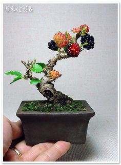 Blackberry Bonsai - First time I've ever seen this thorny shrub used this way and I LOVE IT!!