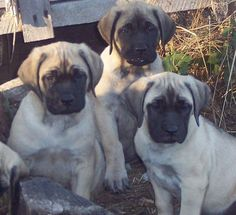 I'd have to get two so they could be Mack and Dane (Mack would be a female)