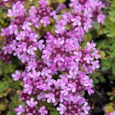 Balkon-Blumen - Retter für Bienen, Hummeln und Schmetterlinge In der warmen Jahreszeit erfreuen wir uns alle an blühenden Blumen, Sträuchern und Kräutern. Obwohl auch die Balkonfreunde, die wunderschöne blühende und bunte Oasen auf ihrem Balkon haben immer weniger werden, ist das nichts im Vergleich zum Bienensterben. In diesem Jahr ist es besonders schlimm. Quer durch Deutschland und Österreich höre ich von vielen, dass kaum noch Bienen gesehen wurden. Neben den Pestiziden die Firmen wie…