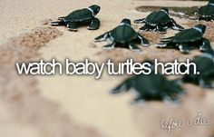 Bucket List item: watch baby turtles hatch.