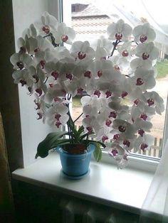Odkvitla Vám orchidea? Tu sú najjednoduchšie spôsoby ako ju znova rozkvitnúť! – Báječné Ženy