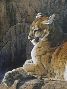 Wildlife painting of a cougar (mountain lion) resting on a rocky ledge. Beautiful Cats, Beautiful Artwork, Animals Beautiful, Cute Animals, Wildlife Paintings, Wildlife Art, Animal Paintings, Big Cats Art, Cat Art