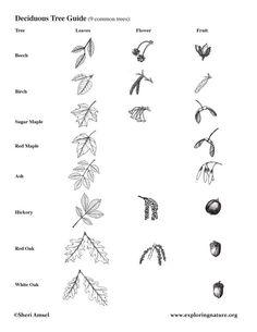 activity graphic