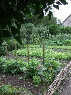 Rustic Charm Kitchen Garden