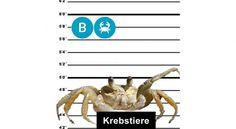Krebs-Allergen-Tatort Magazine, Animals, Fine Dining, Letter B, Food Menu, Foods, Animaux, Animal, Animales