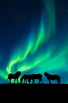 The art of the Aurora: Shooting tips for the world's best light show - Australian Photography Dk Photography, Australian Photography, Beautiful Sky, Beautiful Horses, Aurora Borealis, Volcan Eruption, Northen Lights, Icelandic Horse, Horse Silhouette