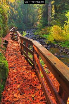 Beautiful river walk in Oregon >>> check similar images on.