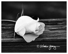 Rose in Black and White 5719 Fine Art Photography by Gallery316