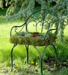 Chaise de jardin avec succulentes, sedums, joubarbes et sempervivums.