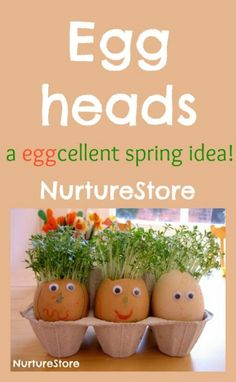 with cress hair Eggheads with cress hair - fun spring activity for kids! Nice Easter egg activity - get kids gardening!Eggheads with cress hair - fun spring activity for kids! Nice Easter egg activity - get kids gardening!