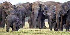 #Internacional Cazadores furtivos matan al menos 19 #elefantes en Mali
