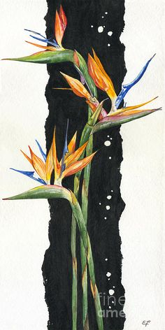 Strelitzia - Bird Of Paradise 11 Poster by Elena Yakubovich. All posters are professionally printed, packaged, and shipped within 3 - 4 business days. Choose from multiple sizes and hundreds of frame and mat options. Bird Of Paradise Tattoo, Bird Of Paradise Yoga, Birds Of Paradise Plant, Plant Painting, Plant Drawing, Art Floral, Watercolor Flowers, Watercolor Art, Drawing Flowers