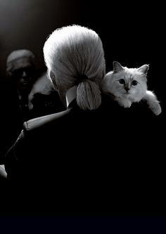 Karl Lagerfeld & Choupette by Karl Lagerfeld.