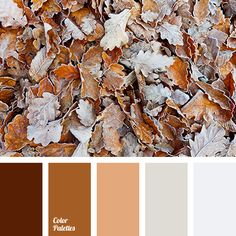 beige, color match for renovation, color palette for home, color solution for home, dark brown, ginger brown, grey brown, light grey, orange color, shades of brown, shades of grey.