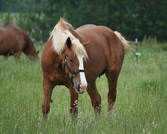 draft horse baby - Google Search