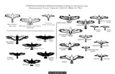 Generalized flight form of certain birds of prey