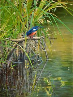 Azure Kingfisher Bird Art by Bird Artist Lyn Ellison