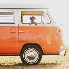 vw camper van complete with dog! Partner in crime. Photo by - Camper Wiz Volkswagen Transporter, Volkswagen Bus, Vw T1 Camper, Kombi Motorhome, Vw Mk1, Volkswagen Beetles, Vw Camper For Sale, Road Trip Van, Combi Vw T2