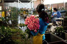 Colombia's Bloom Boom - Roads & KingdomsRoads & Kingdoms