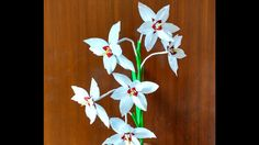 Paper Flower Peacock Orchid \ Gladiolus Acidenthera (flower # 148)