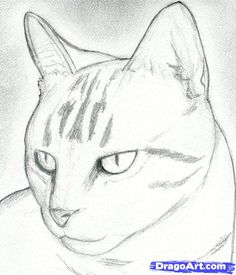 howto draw kittens | How to Draw a Cat Head, Draw a Realistic Cat, Step by Step, Pets ...