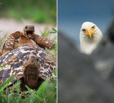 Comedy Wildlife Photography Awards:  The best thing you'll see today.