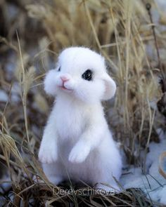 Baby animals pictures, cute animals - New Sites Draw Cute Baby Animals, Baby Animals Super Cute, Cut Animals, Baby Animals Pictures, Cute Little Animals, Cute Animal Pictures, Animals Images, Funny Animals, Easy Animal Drawings