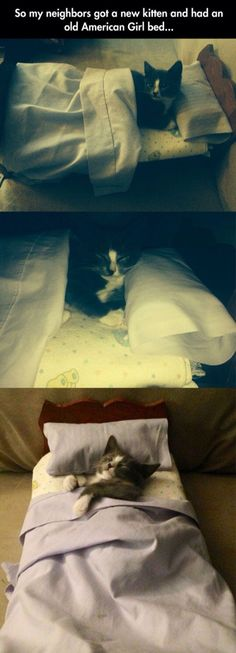 Adorable kitty sleeps in an bed. Too cute for words! Cute Kittens, Cats And Kittens, Baby Animals, Funny Animals, Cute Animals, Funny Cats, I Love Cats, Crazy Cats, Catsu The Cat