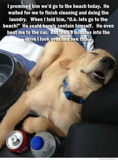 Sounds like something Marty would do. #dogsaregreat